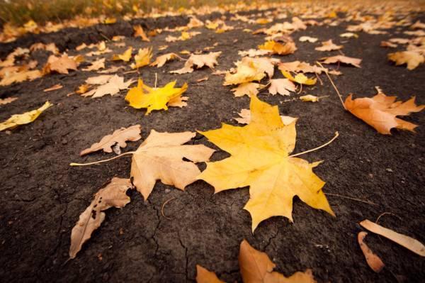 depositphotos_8149983-stock-photo-fallen-leaves.jpg