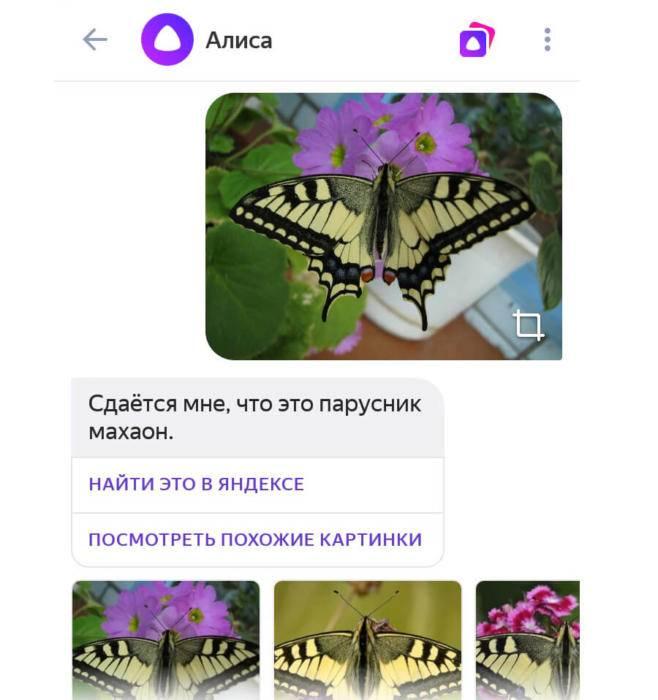 alisa10.jpg