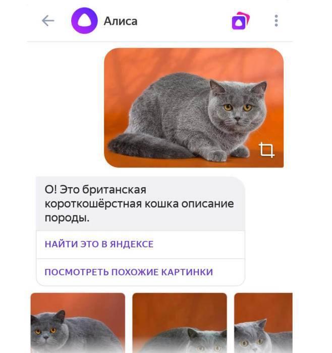 alisa7.jpg